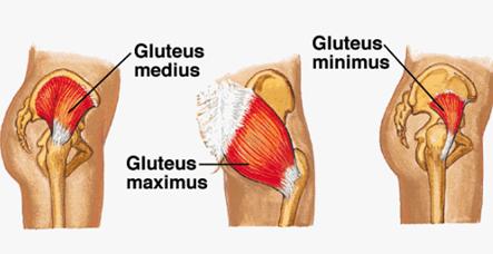 La importancia de la cadera (II) glúteo medio y dolor de rodilla